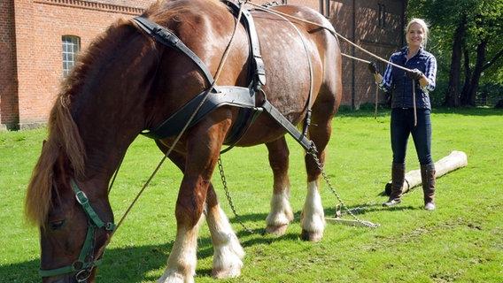 Judith rakers abenteuer pferd kaltblter ndr fernsehen bild vergrern altavistaventures Images