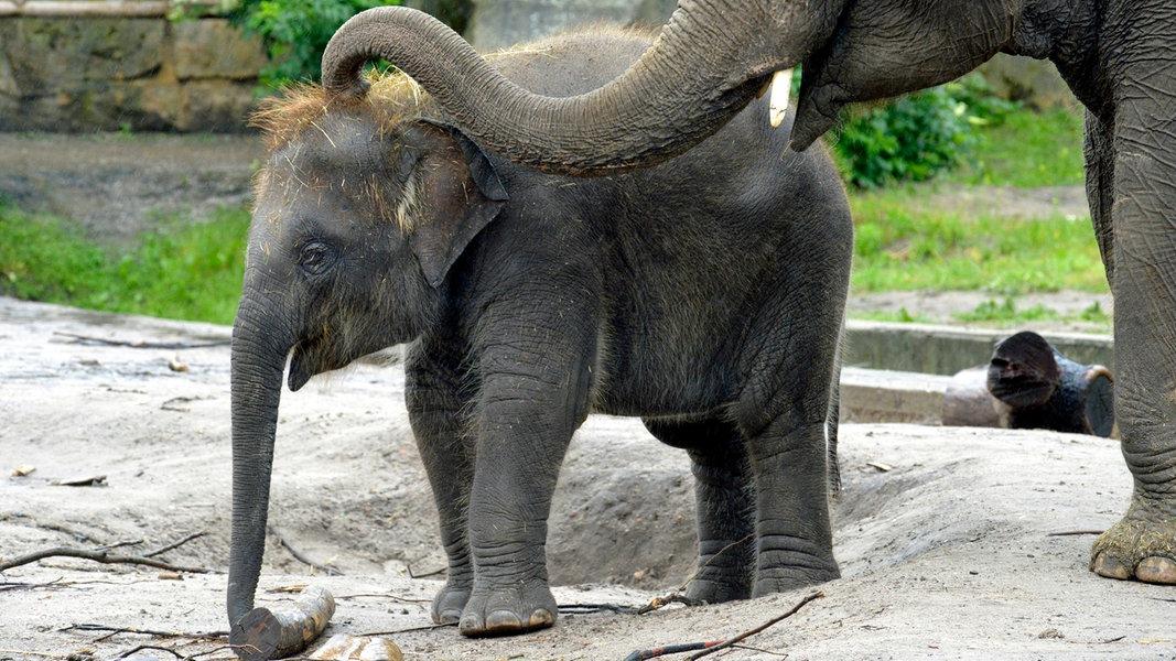 Zoo Sendung