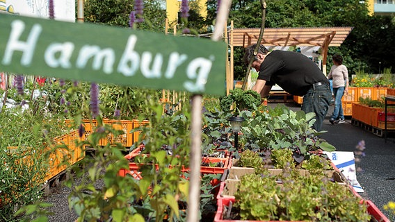 urban gardening beim gartendeck hamburg st pauli ratgeber garten. Black Bedroom Furniture Sets. Home Design Ideas