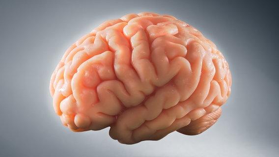 Das Gehirn - Schaltzentrale unseres Körpers | NDR.de - Ratgeber ...