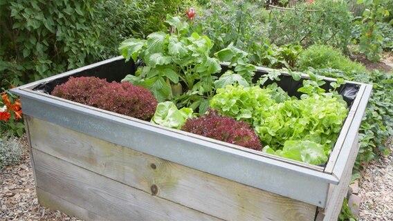 setzlinge im vergleich tomate chili und salat ratgeber verbraucher. Black Bedroom Furniture Sets. Home Design Ideas