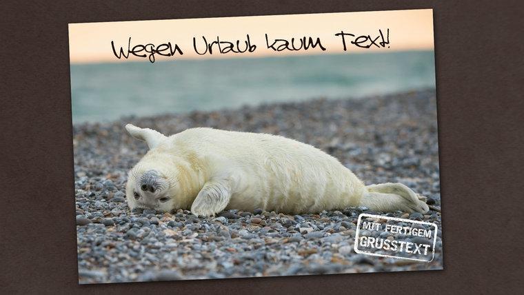 Auf einer  Postkarte ist eine Robbe abgebildet. © Schöning GmbH & Co. KG