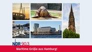Eine Hamburg Postkarte mit fünf typischen Motiven: Nikolaikirche, Alsterschwäne, Hafencity, Köhlbrandbrücke und Antje. © NDR Foto: NDR , Christine Raczka, dietwalther, dietwalther, Axel Heimken