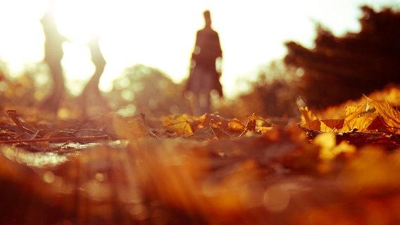 Silhouette eines Menschen im herbstlichen Wald. © photocase Fotograf: Hello_beautiful