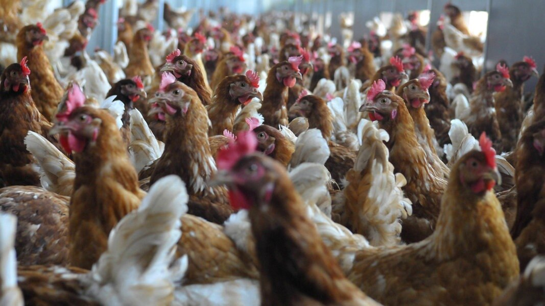 Geplante Hähnchenmastanlage sorgt für Diskussionen