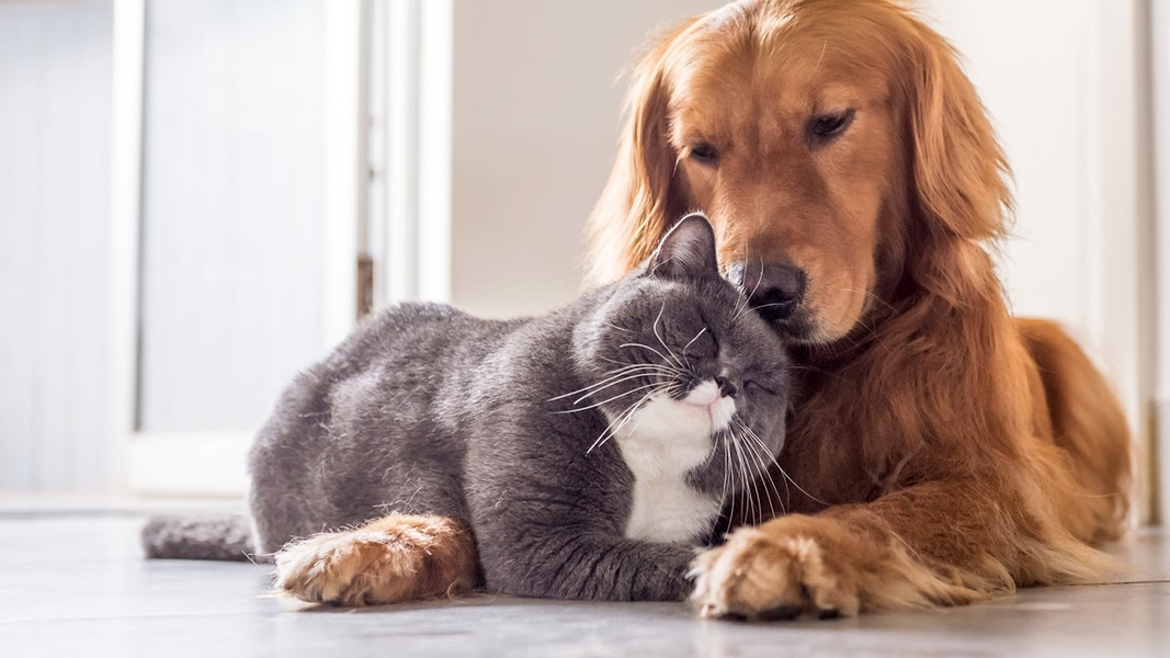 Wie Hund Und Katze Film