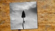 "Cover des Albums ""A Black Mile To The Surface"" von Manchester Orchestra. © Loma Vista Recordings"