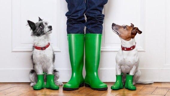 Zwei Hunde und ein Mensch mit grünen Gummistiefeln. © javier brosch/fotolia Foto: javier brosch