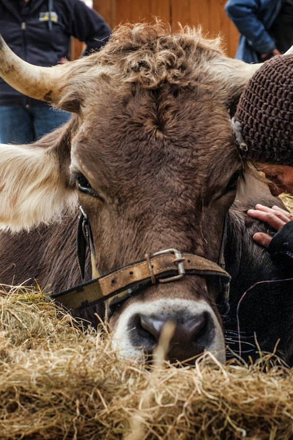 """Kinofilm """"Butenland"""": Lebenshof für alte Tiere"""