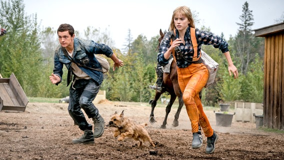 """Viola Eade (Daisy Ridley) and Todd (Tom Holland) flee with their dog - scene from the action film """"Chaos Walking"""" © Studiocanal GmbH / Lionsgate / Murray Close Foto: Murray Close"""