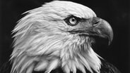 Robert Longo: Untitled (American Bald Eagle) 2017. Charcoal on mounted paper. Ståhl Collection, Norrköping, Sweden © Robert Longo Fotograf: Robert Longo