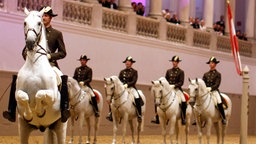 Weißer Lipizzaner mit Reiter in Formation. © picture alliance/APA/picturedesk.com