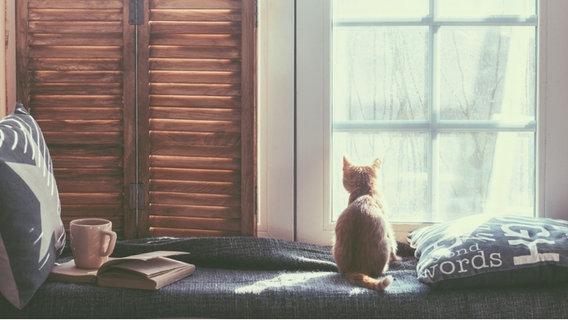 Katze sitzt am Fenster neben Buch und Becher. © fotolia Foto: Alena Ozerova