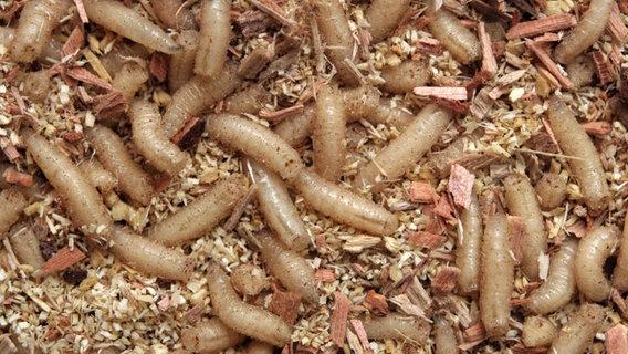 Entfernen lebensmittelmotten maden Lebensmittelmotten: Bekämpfung