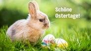 """""""Schöne Ostertage!"""" steht auf einer E-Card mit einem Osterhasen und Eieren auf der Wiese. © fotolia.com Foto: drubig-photo"""