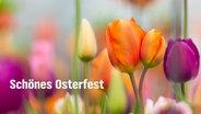 """""""Schönes OSterfest!"""" steht auf einer E-Card mit Tulpen. © fotolia.com Foto: Lukas Gojda"""