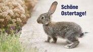 """""""Schöne Ostertage!"""" steht auf einer E-Card mit einem kleinen Hasen. © Colourbox Foto: Dmytro Buianskyi"""