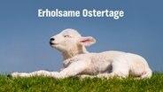 E-Card mit einem Lämmchen und dem Schriftzug Erholsame Ostertage. © fotolia.com Foto: crimson