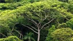 Regenwald im brasilianischen Bundesstaat Sao Paulo © picture-alliance/dpa