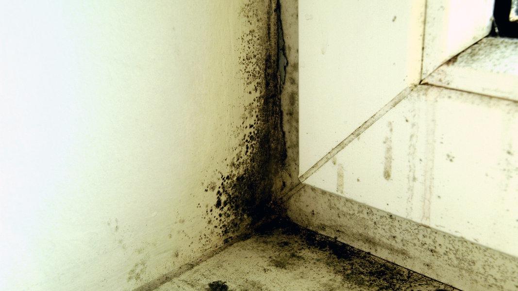 schimmel entfernen und vermeiden seite 2 ratgeber verbraucher. Black Bedroom Furniture Sets. Home Design Ideas