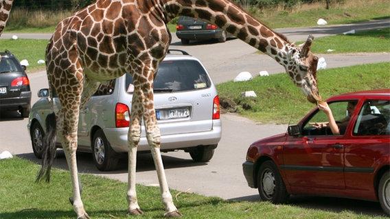 serengeti park zur safari in die heide ratgeber reise tierparks. Black Bedroom Furniture Sets. Home Design Ideas