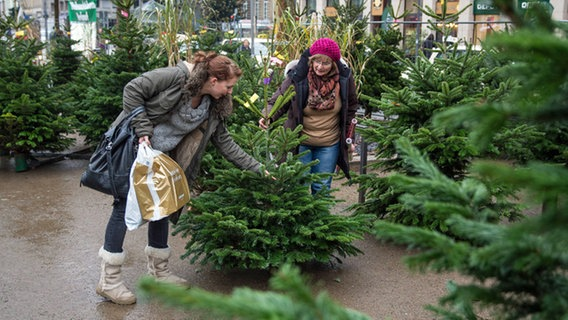 Wann Weihnachtsbaum Kaufen Weihnachtsbaum kaufen: Nordmanntanne oder Fichte? | NDR.de   Ratgeber