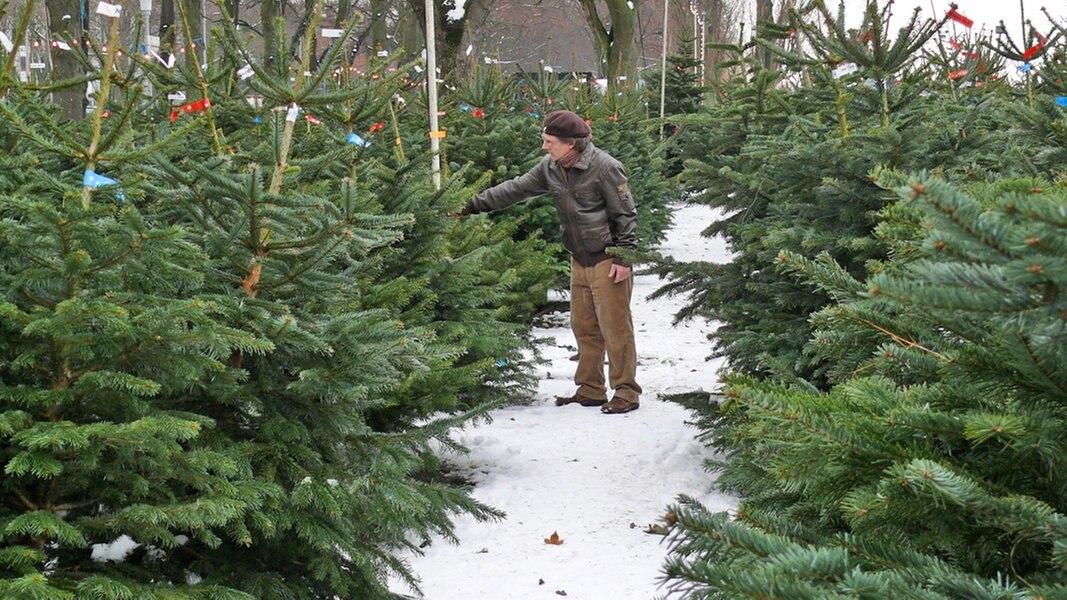 Douglasie Weihnachtsbaum Kaufen.Die Beliebtesten Nadelbaumsorten Ndr De Ratgeber Garten