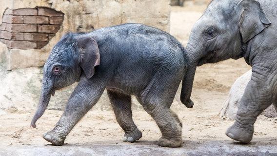 Zu Weihnachten: Elefantenbaby bei Hagenbeck