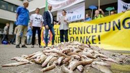 Umweltschützer tragen Kisten mit Fischen, die in der Elbe tot in den Netzen gefunden wurden, vor die Hamburger Wirtschaftsbehörde © dpa