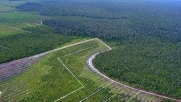 Palmölplantage in Indonesien  Foto: nordin