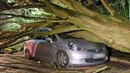 Ein umgestürzter Baum liegt in Hamburg auf einem Auto. © picture alliance / dpa Foto: Daniel Bockwoldt