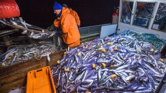 EU-Minister einigen sich auf Fischfangquoten in der Ostsee