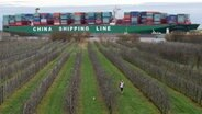 """Das Containerschiff """"CSCL Indian Ocean"""" liegt in der Elbe auf Grund, im Vordergrund eine Obstplantage. © dpa Fotograf: Daniel Bockwoldt"""