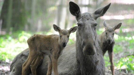Corona-Krise: Tierparks schlagen Alarm