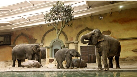Das Elefantenhaus in Hagenbecks Tierpark. © picture alliance