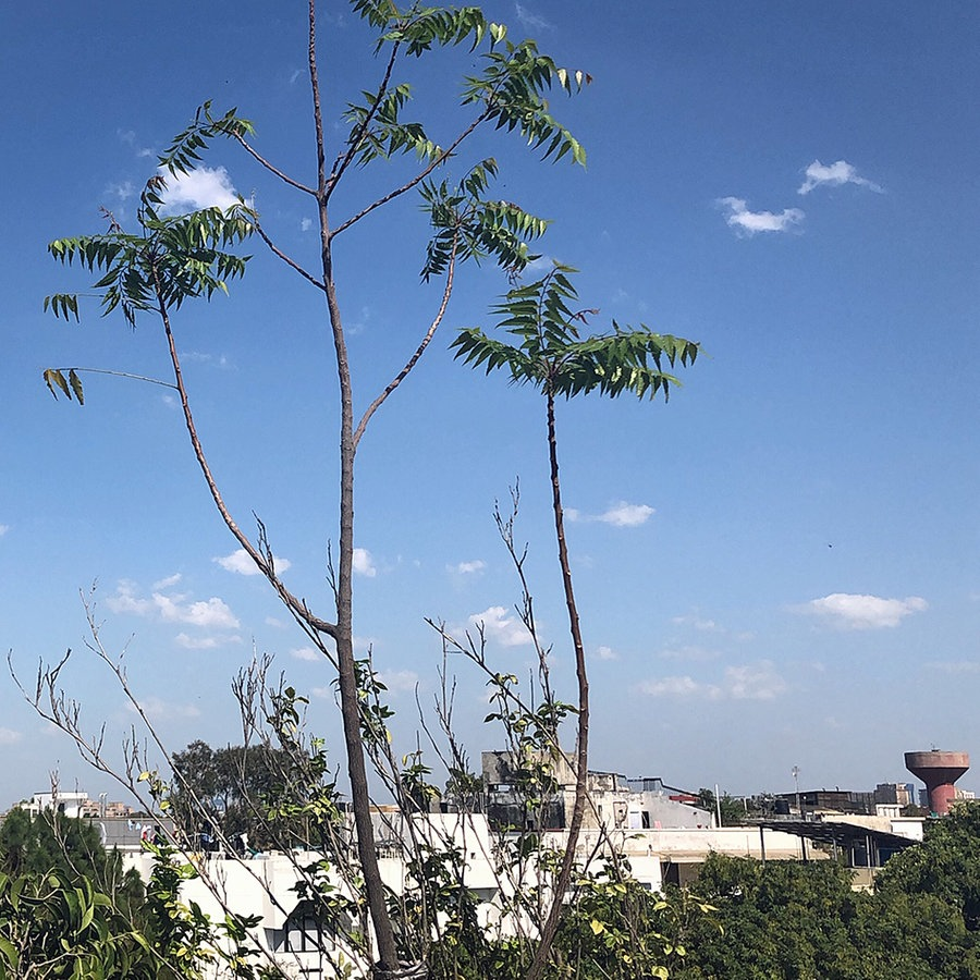 Dank Corona: Das Klima in Neu-Delhi atmet auf