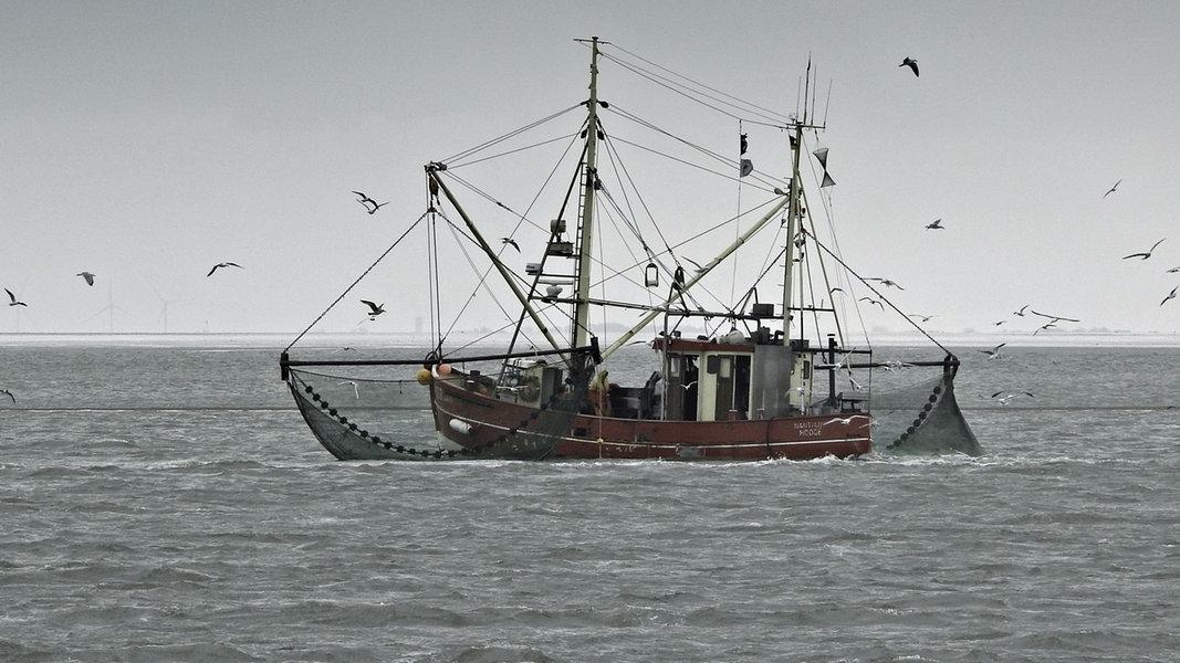 Zwangspause für Krabbenfischer in Ostfriesland