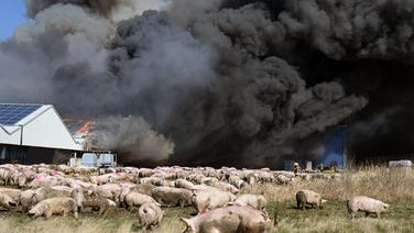 In einem großen Schweinezuchtbetrieb in Alt Tellin (Kreis Vorpommern-Greifswald) ist ein Feuer ausgebrochen. | dpa-Bildfunk