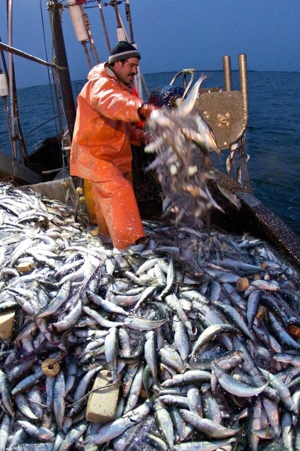 Fangquoten Ostsee