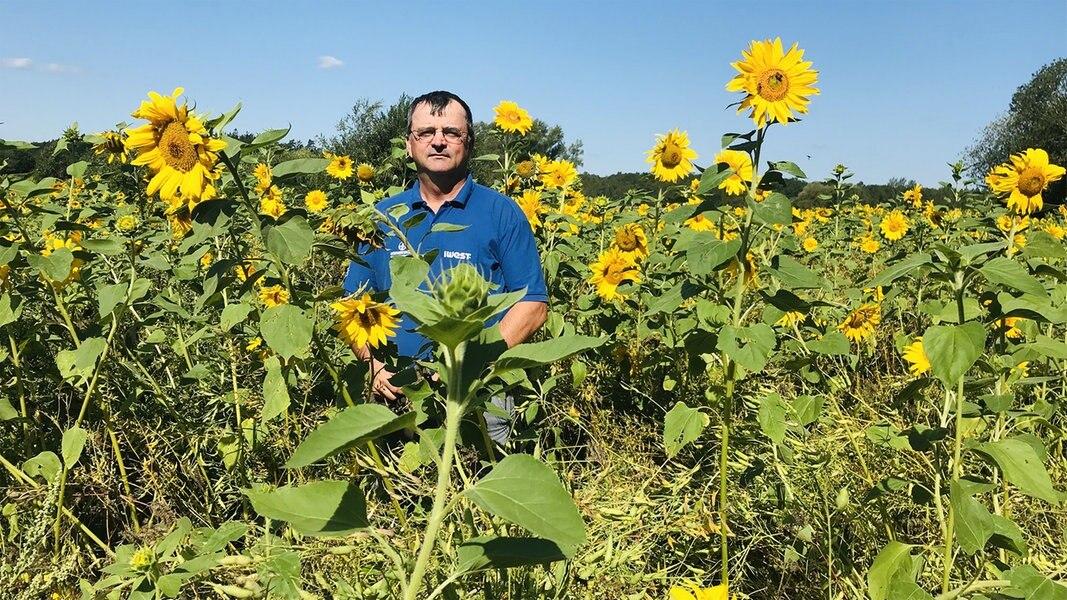 Sanitzer Landwirt ruft Bienenaktie ins Leben