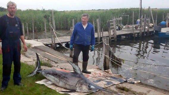 Schwertfisch Ostsee