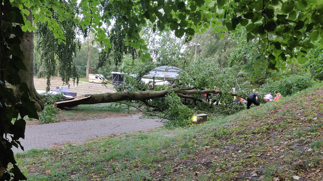 Unfall Freiluftbühne: Baum laut Gutachten morsch