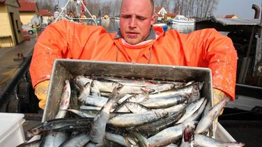 Fischer schüttet eine Kiste Fisch aus. © dpa - Bildfunk Foto: Bernd Wüstneck