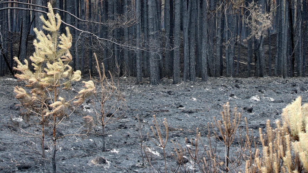 """Waldbrand: Offiziell """"Feuer aus!"""" in Lübtheen"""