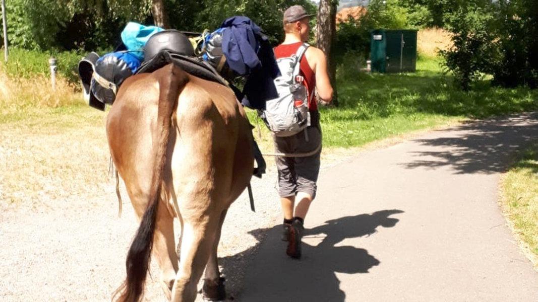 Die Kuh als Kumpel des Menschen