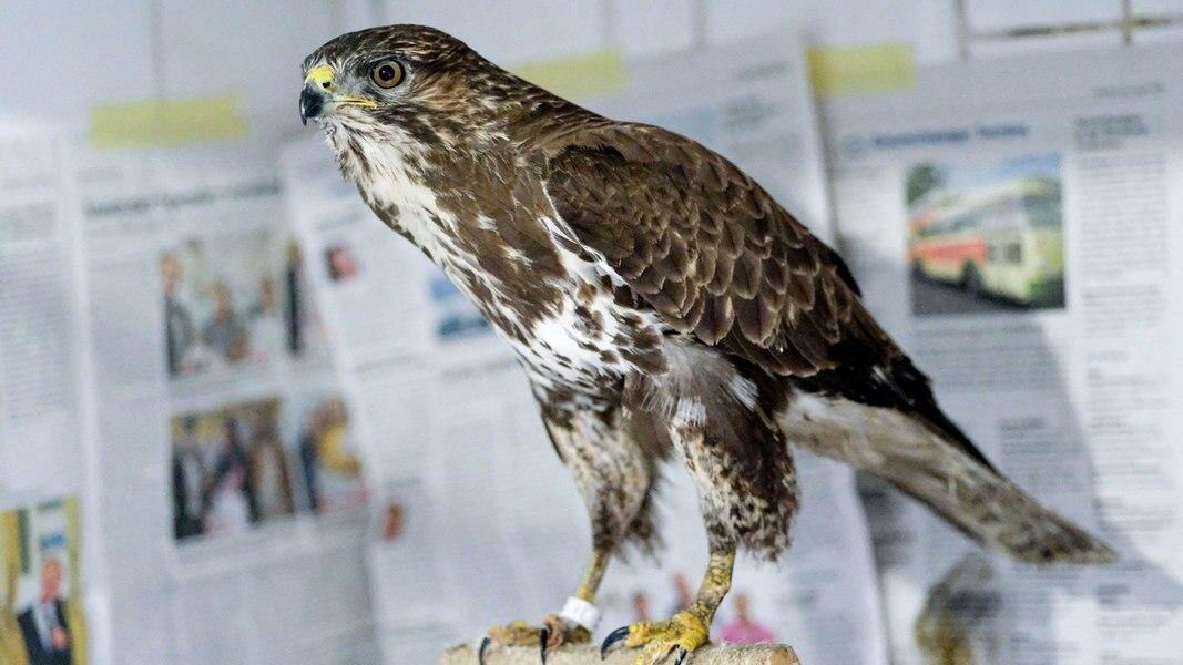 Tier-Rekord in Leiferde: 3.612 Exemplare