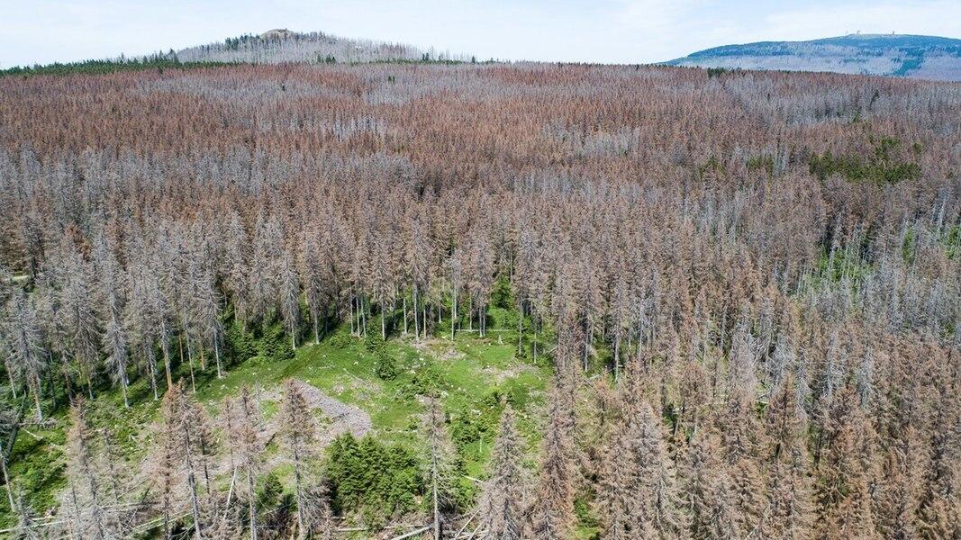 Naturschützer: Borkenkäfer Chance für den Wald