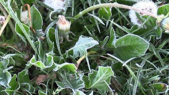 Bauernregel Eisheilige