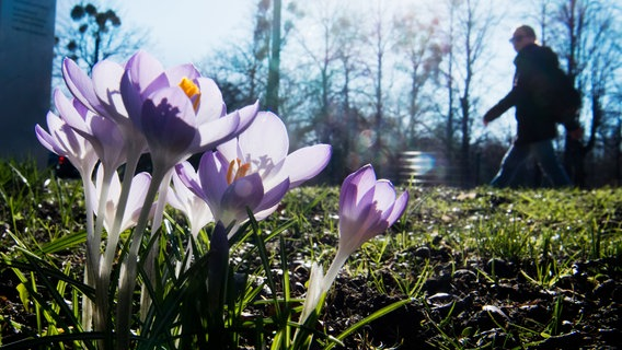 Wetter Ein Erster Hauch Von Frühling Ndrde Nachrichten Wetter