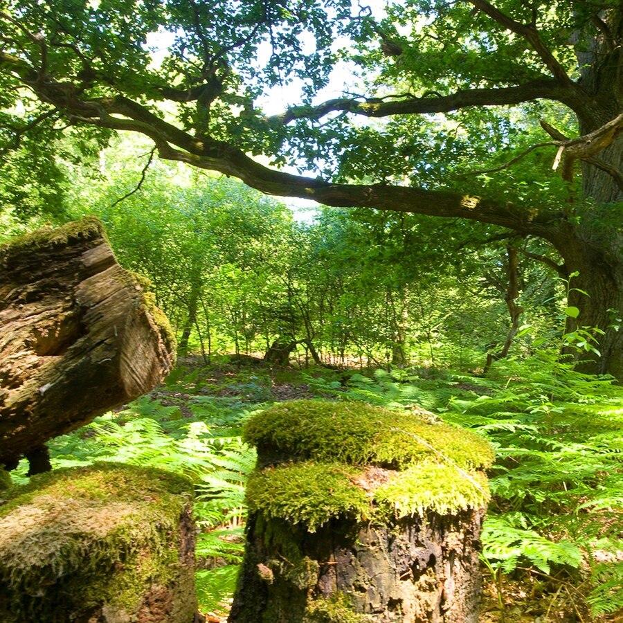 Mehr Wildnis im Wald   Solling wird teilweise zum Urwald   NDR.de ...